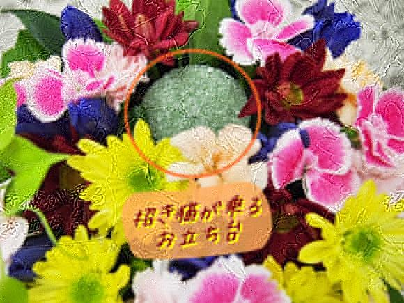 hibiyakadan-manekineko (9)