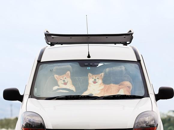 felissimo-sunshade-car-dog (1)