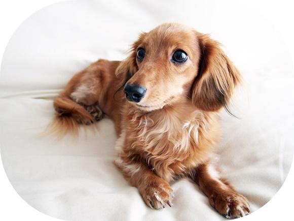 felissimo-sunshade-car-dog (14)