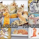 felissimo-neko-cat-youmore (16)