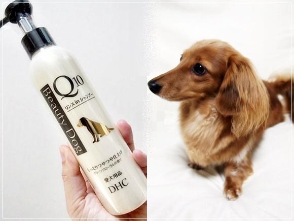犬のシャンプーは低刺激がおすすめ!DHC 犬用 国産 ビューティドッグ リンスインシャンプーQ10の感想