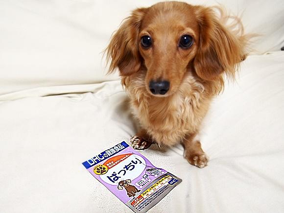 DHC ぱっちり サプリメント 犬