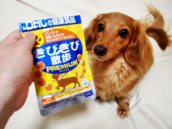 DHC 犬用サプリメント きびきび散歩プレミアムの感想!動物病院の反応やワンコの様子