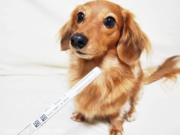 犬 遺伝子検査 ポンテリー